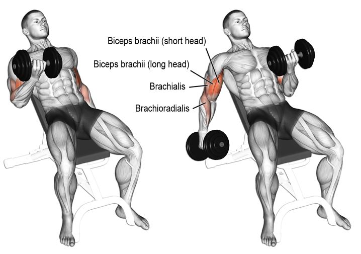Curl biceps incliné - musculation biceps