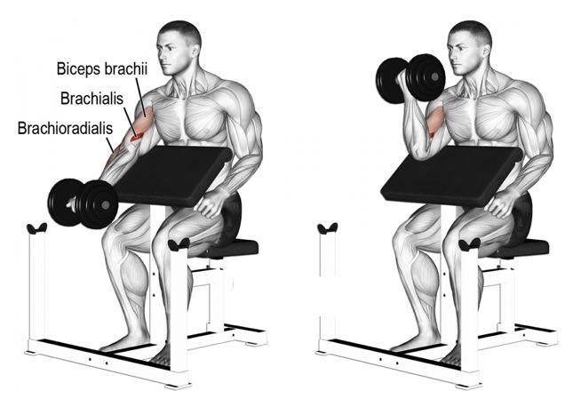 Curl biceps pupitre - Curl Larry Scott - musculation biceps