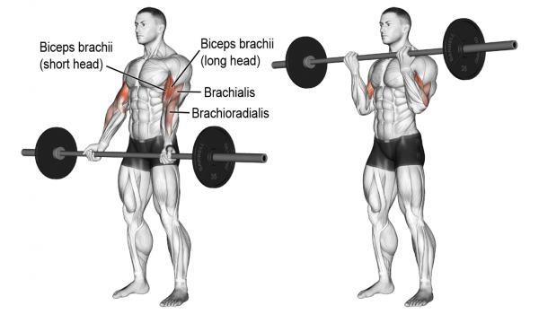Curls biceps à la barre -Superset biceps triceps