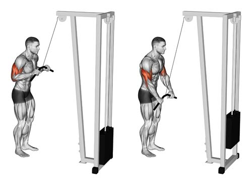 Pushdown triceps barre - musculation triceps