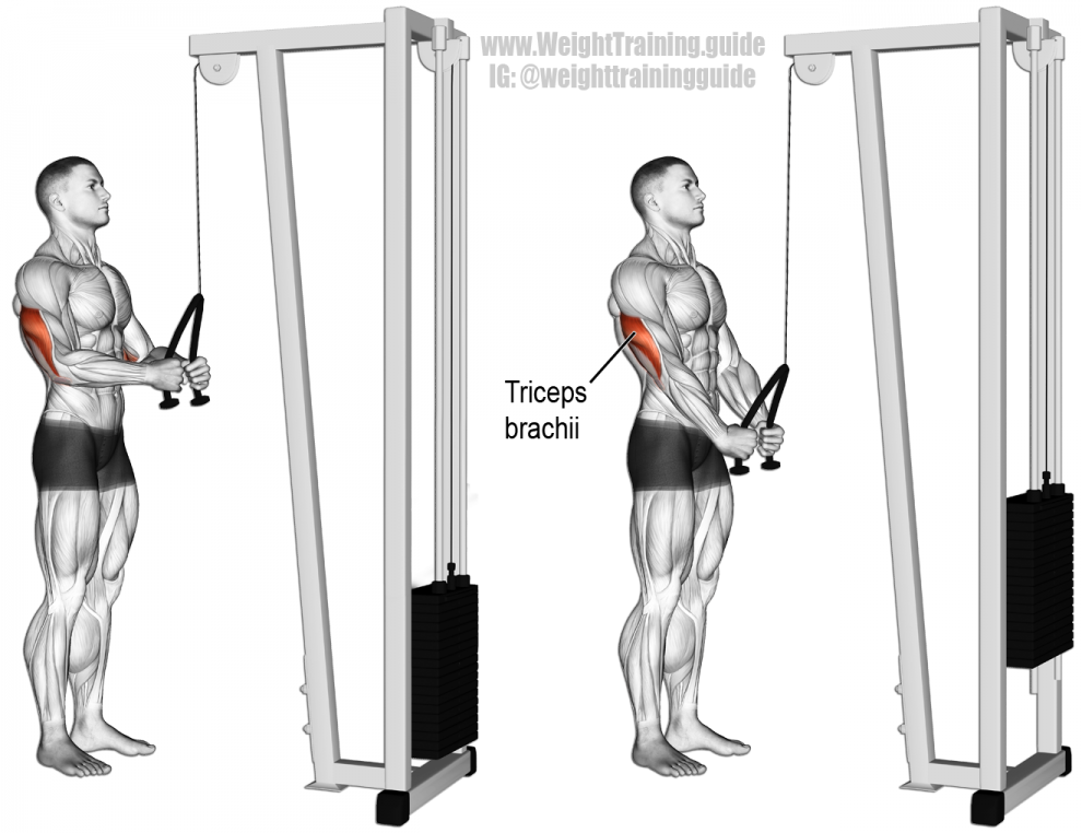 pushdown triceps corde - musculation triceps