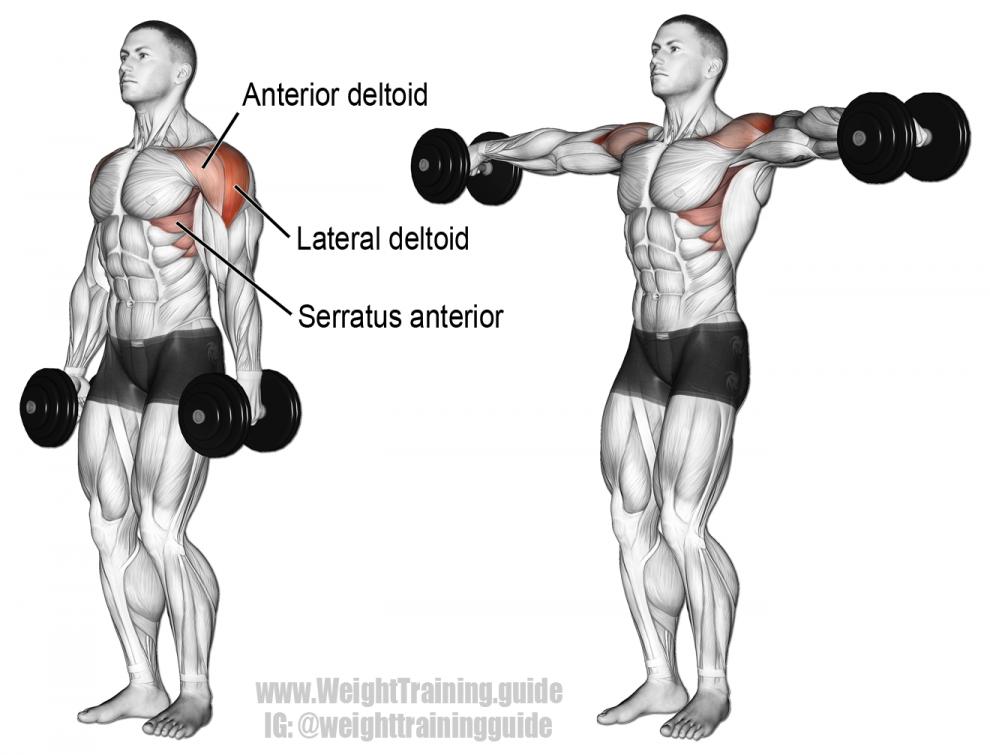 Élévations latérales debout haltères - Musculation Épaules