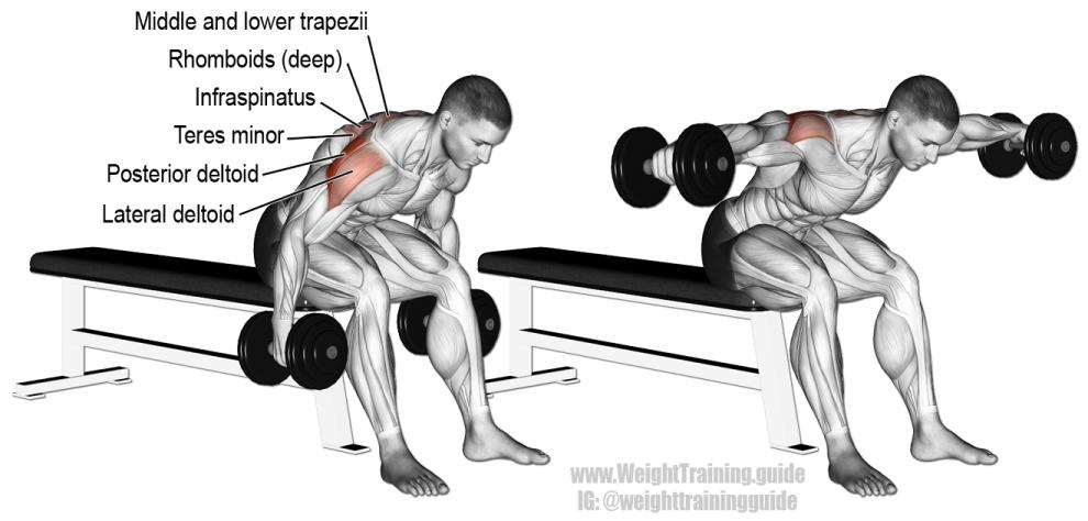 Élévations latérales - oiseau - Musculation Épaules