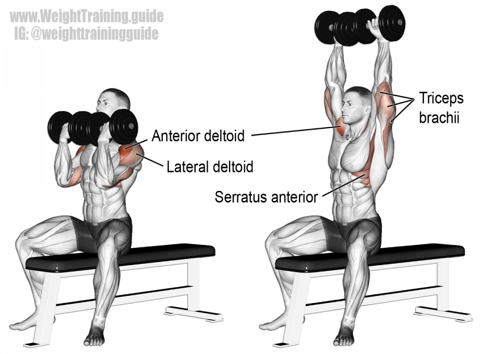 Développé Arnold - Musculation Épaules
