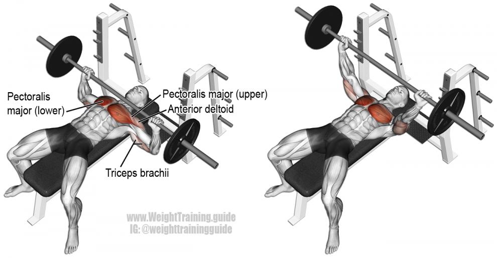 Musculation pectoraux top 5 meilleurs exercices - Pectoraux developpe couche ...