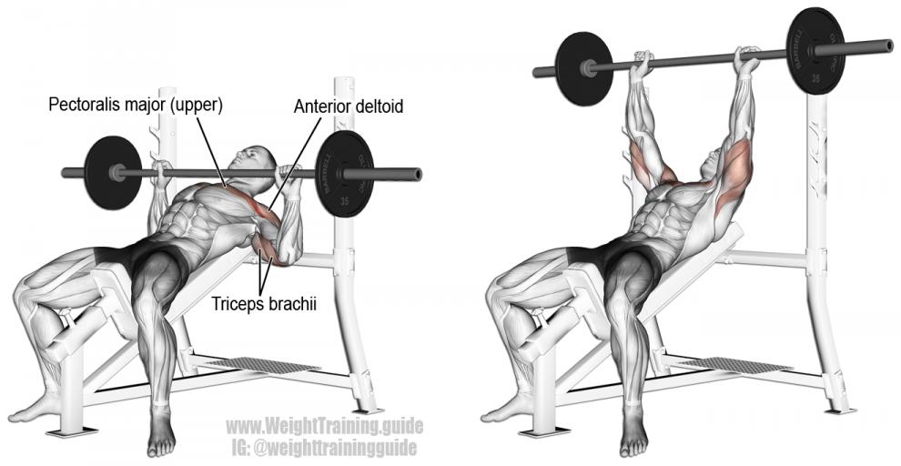 Développé Incliné barre - Exercice Musculation Pectoraux