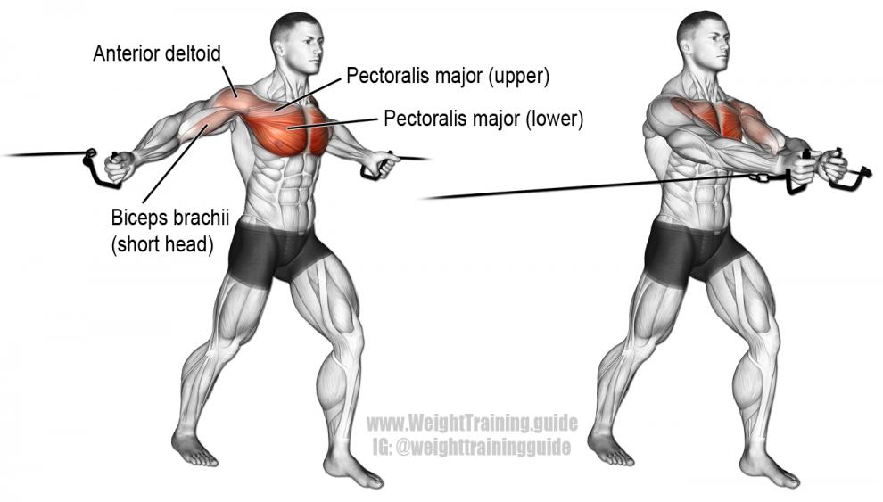 Ecartés debout poulie - Exercice Musculation Pectoraux
