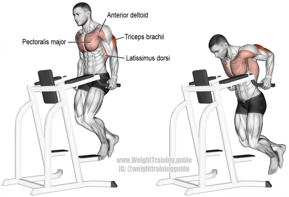 Dips -Exercice Musculation Pectoraux