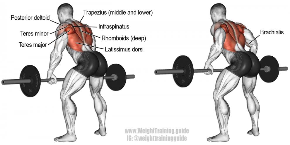 Musculation Dos : Top 5 Meilleurs Exercices de Musculation ...
