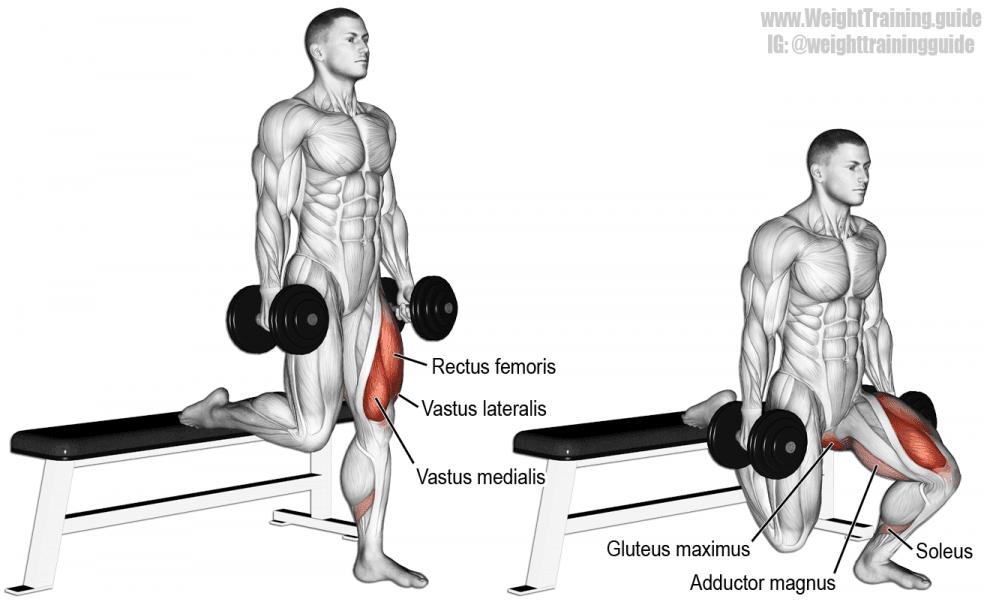 Fentes haltères avec banc - Musculation Jambes quadriceps