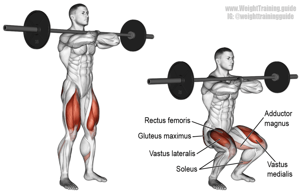 Front Squat barre - Musculation Jambes quadriceps