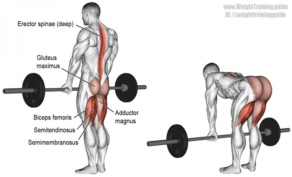 Soulevé de terre jambes tendues - Musculation Ischio-jambiers