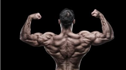 musculation-biceps-curl-concentré