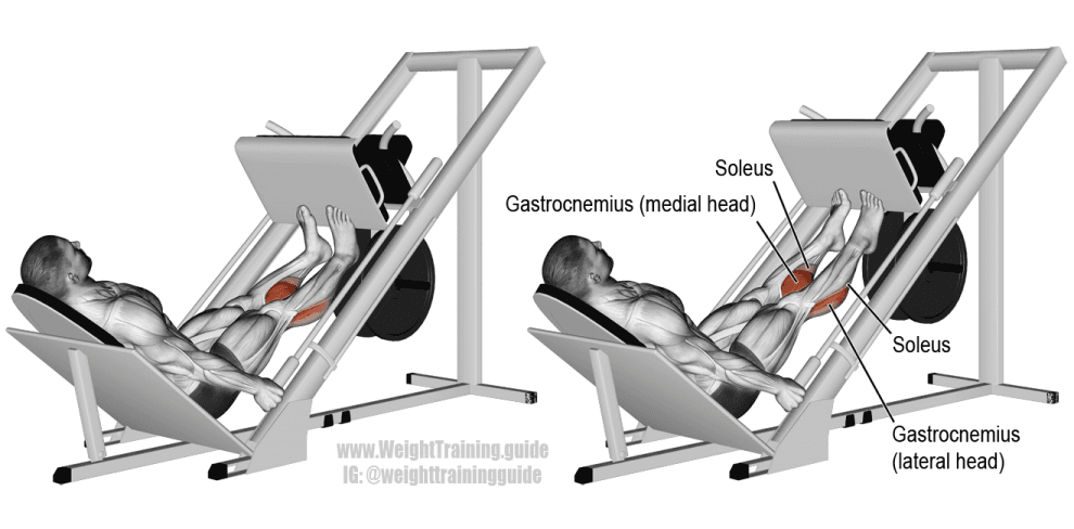 Extensions-mollets-presse-à-cuisse-Exercice-musculation-mollets